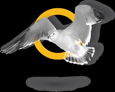 58-bird